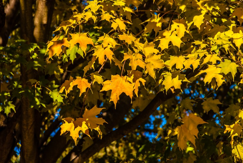 autumn-0098