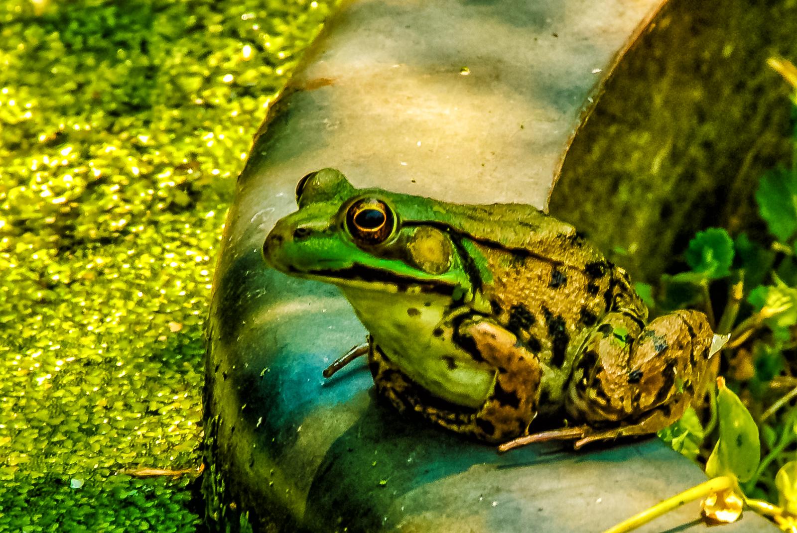 kiss-frog-816