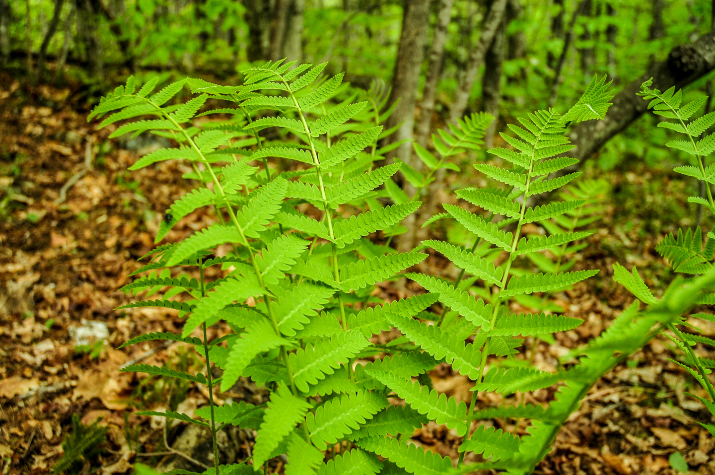 Fern Photos