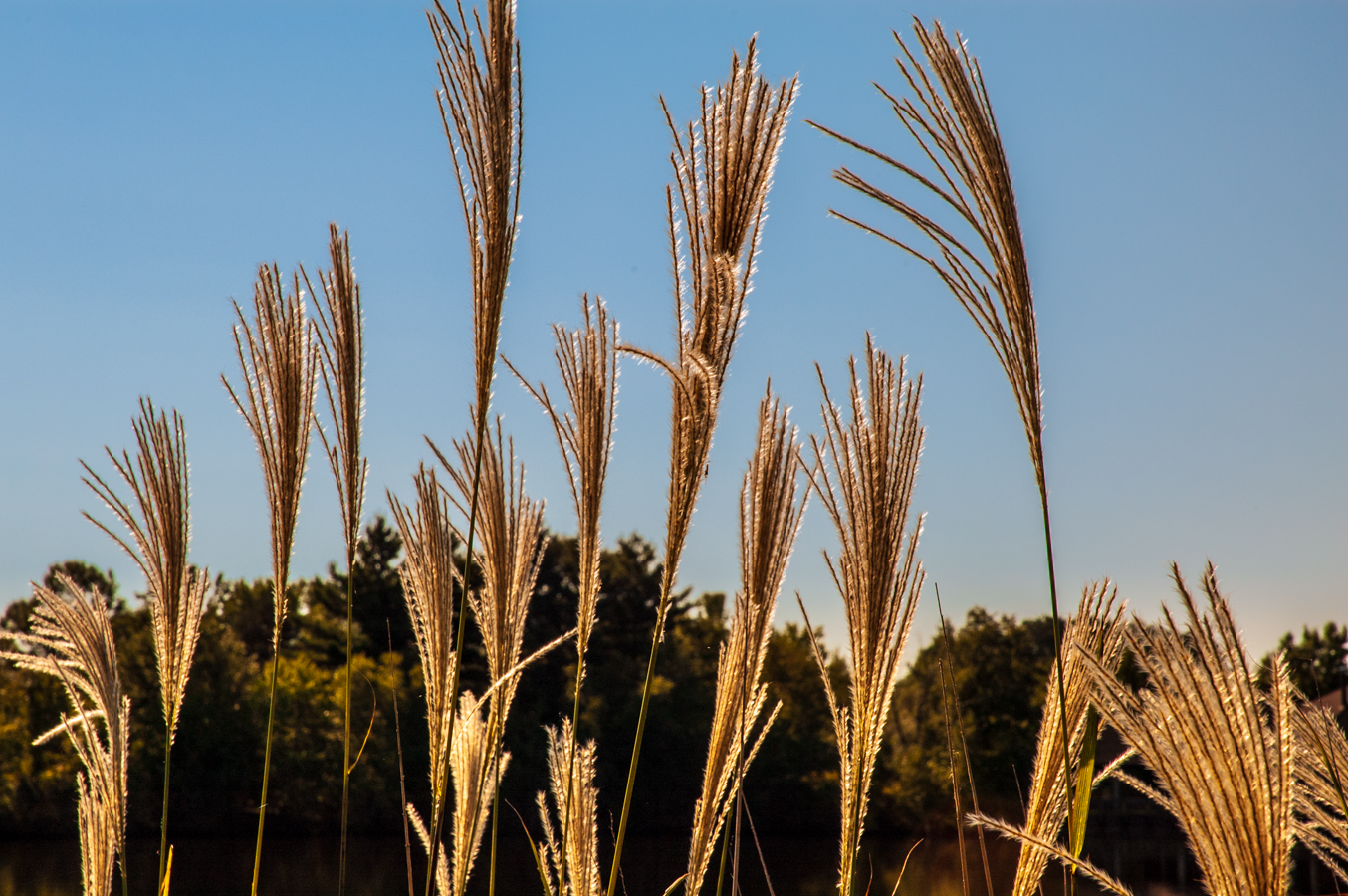 Photo of blades-of-grass-0130