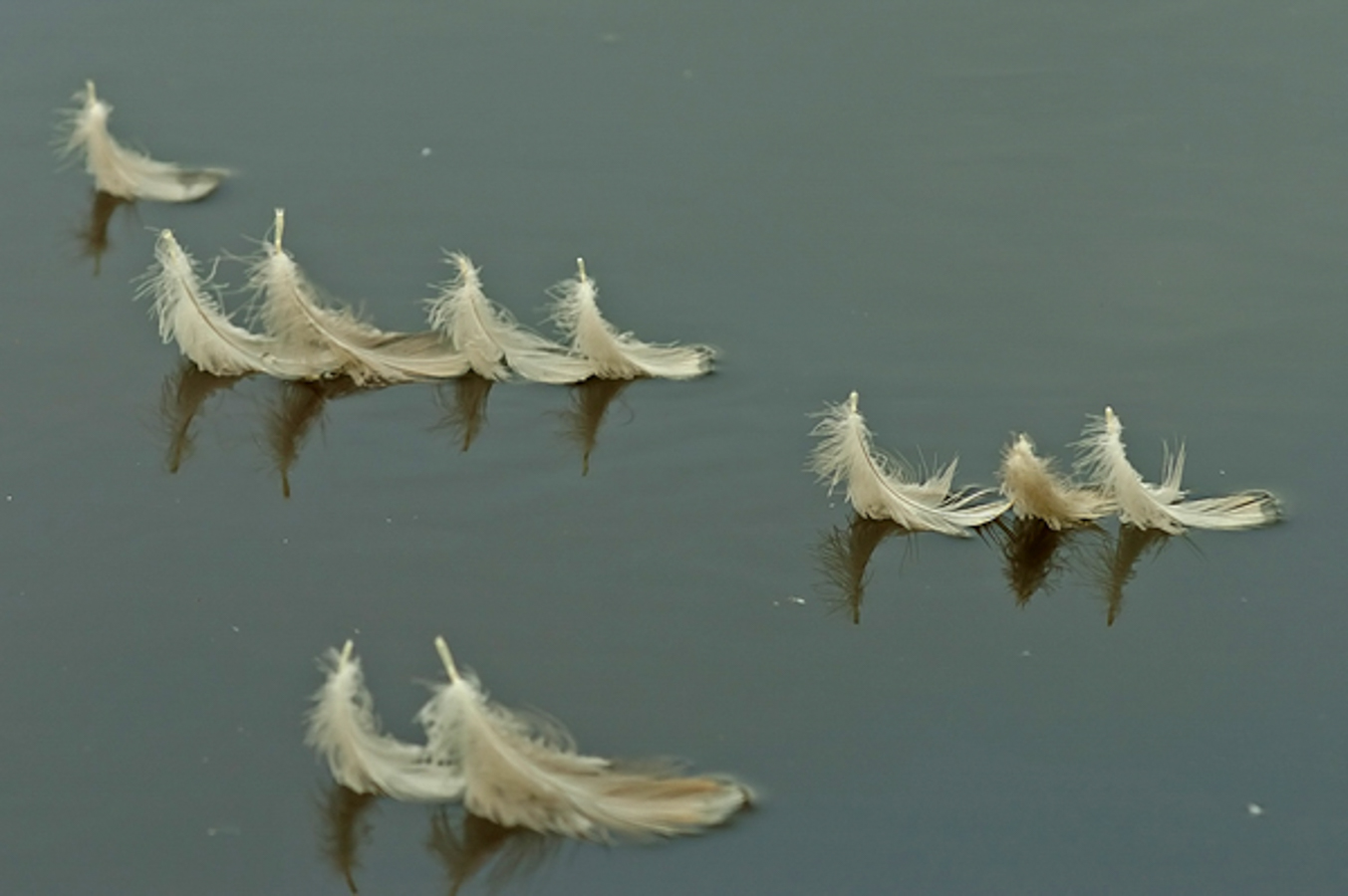 feather-float-photo-0889