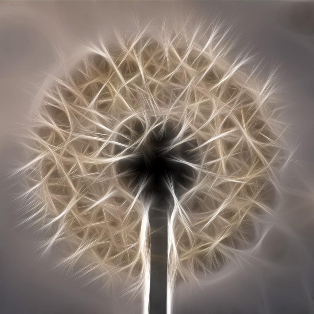 Dandelion fractalius