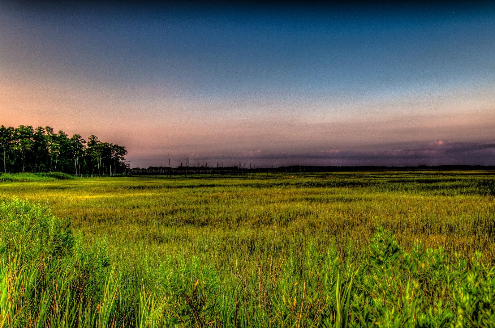 dennis-landscape-2