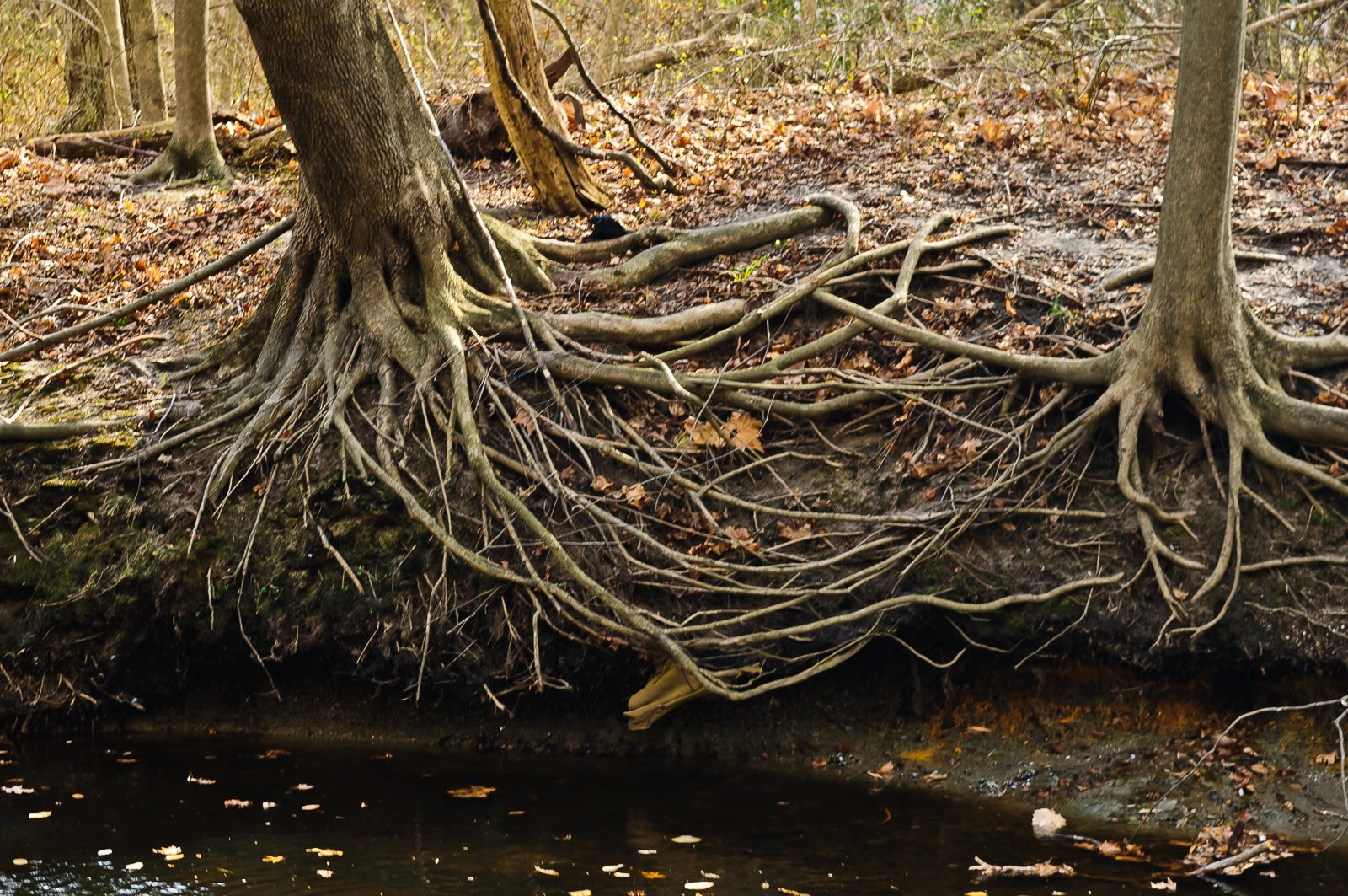 ltd-tree-root-photo-5876