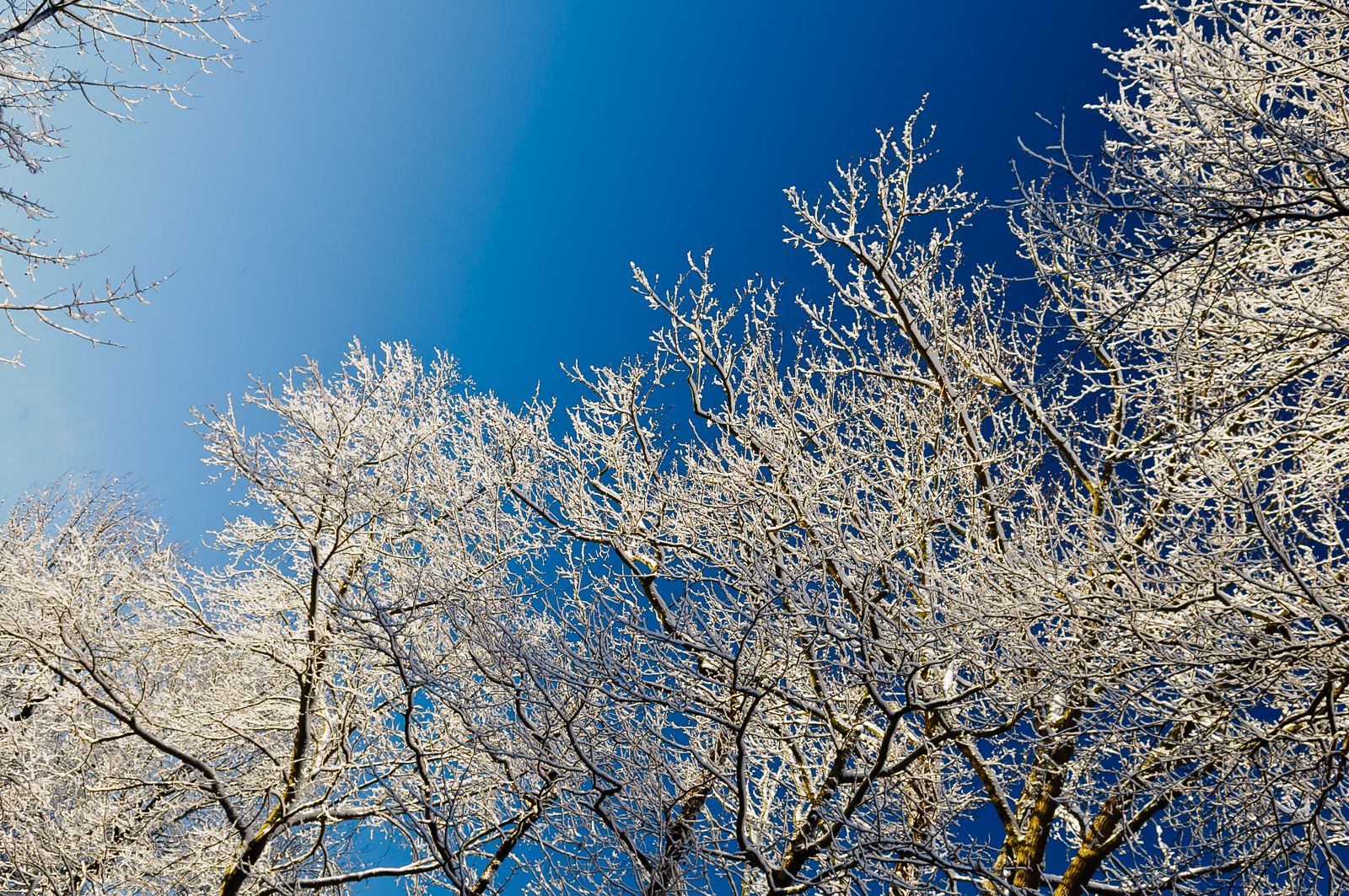snow-trees-5650