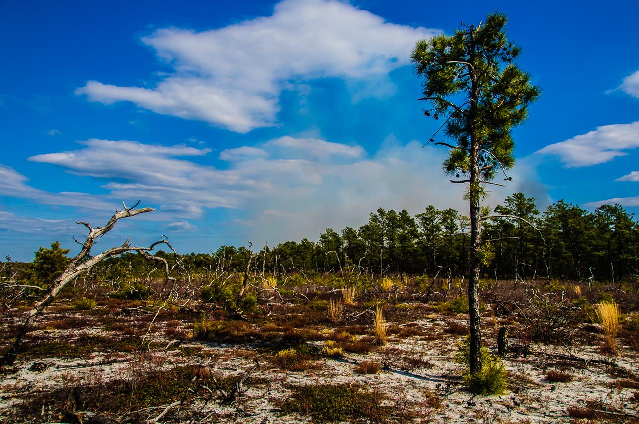 last-pine-tree-7776