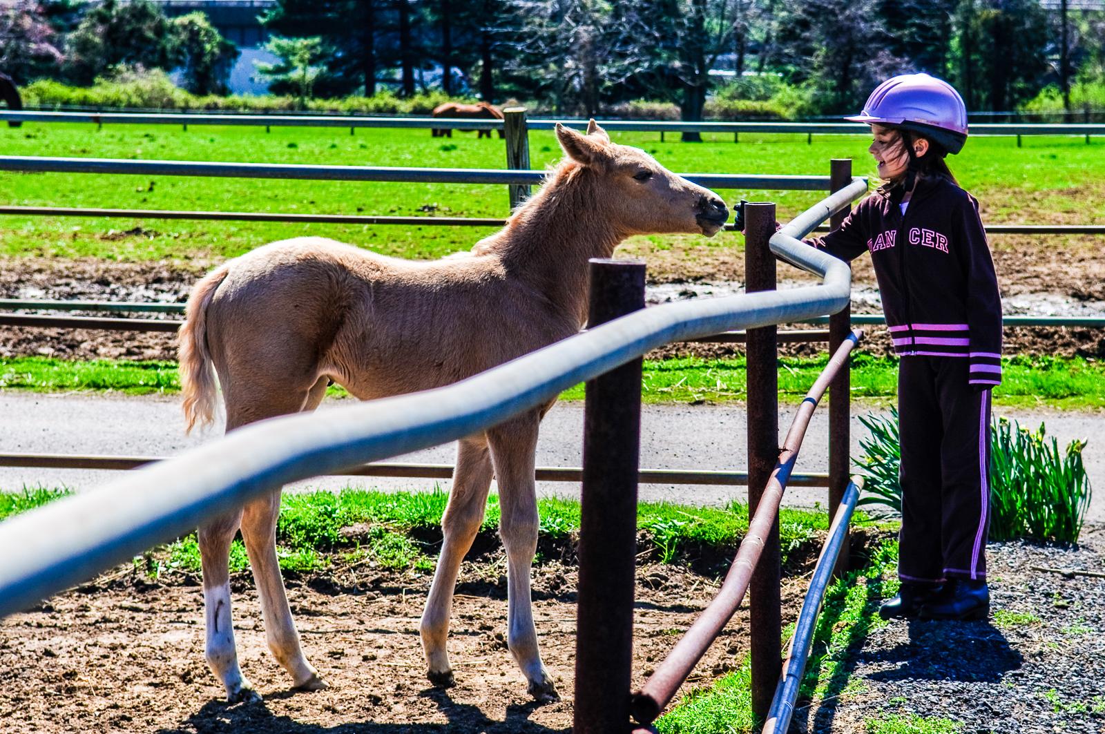 girl-horse-081