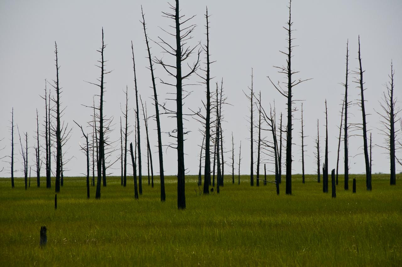 burned-cedars-0430