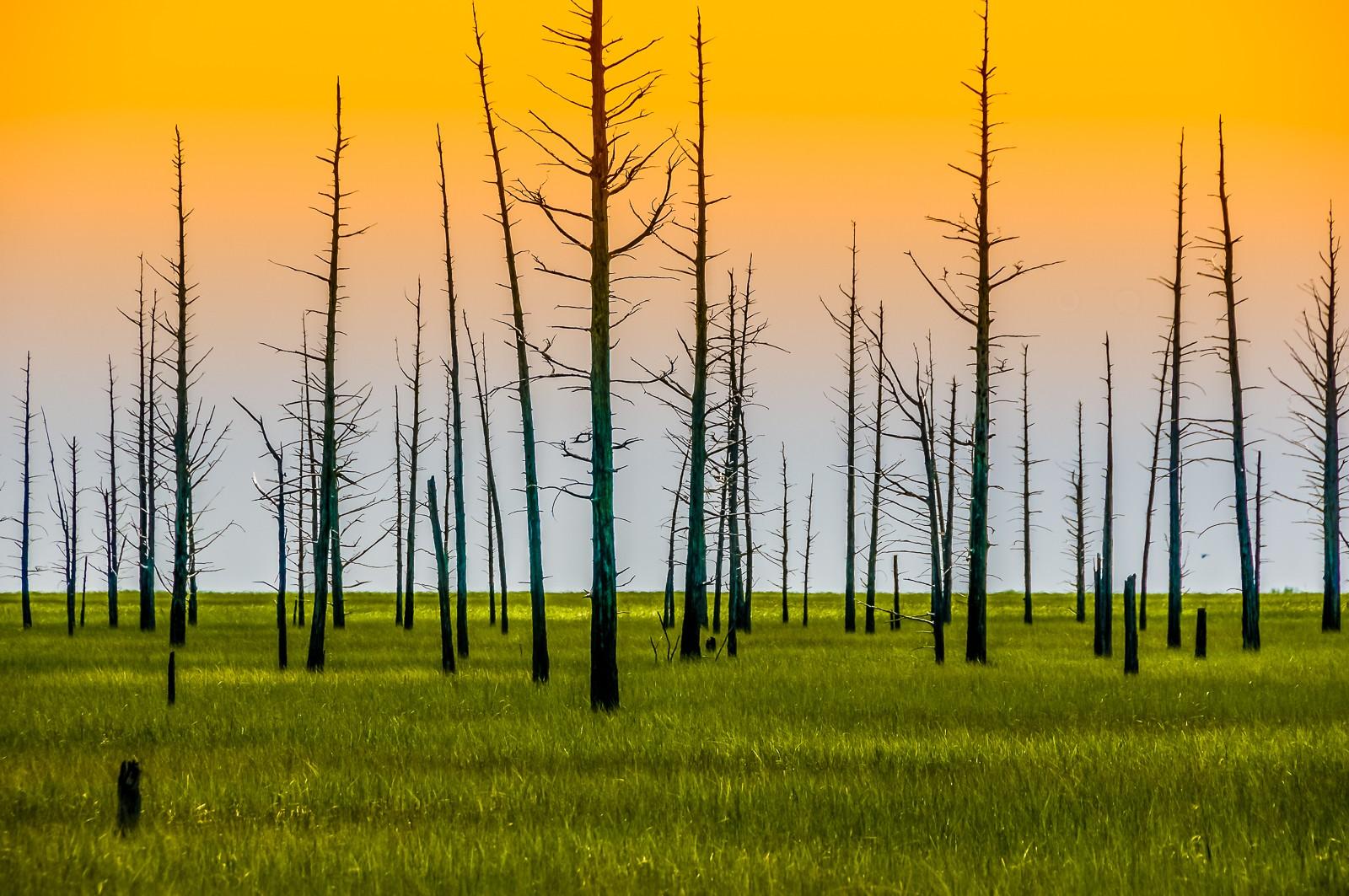 cedar-trees-dennis-0433