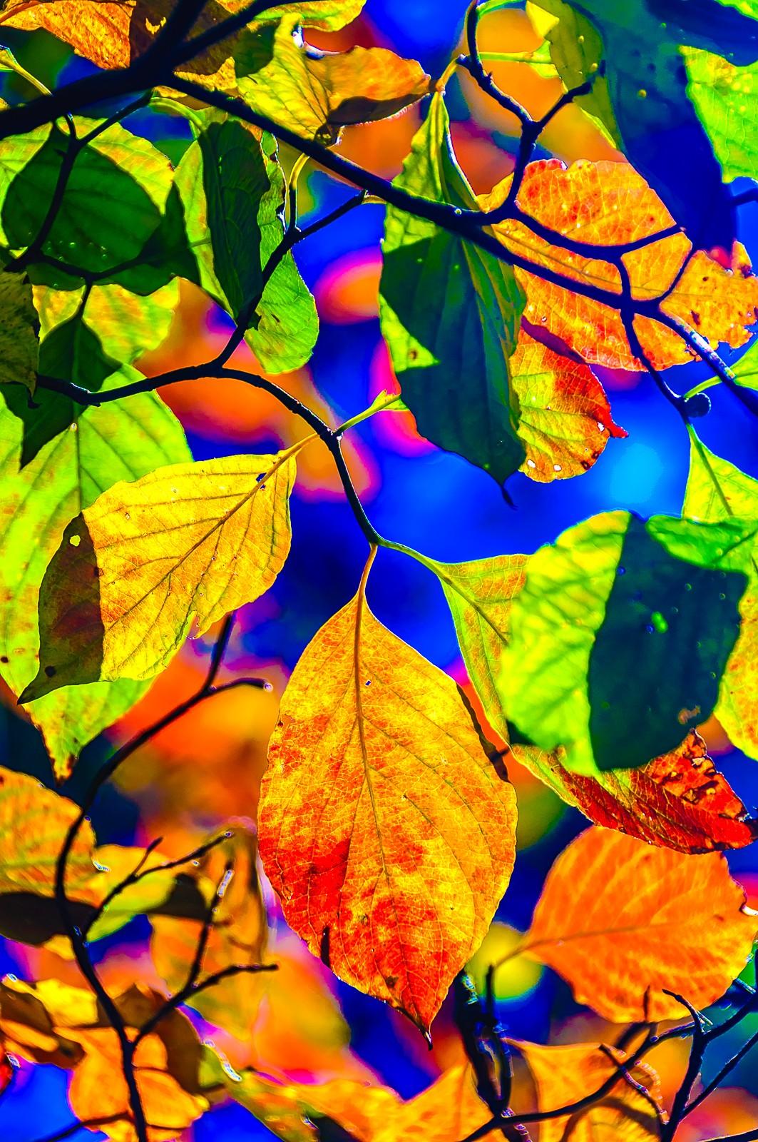 autumn-leaves-