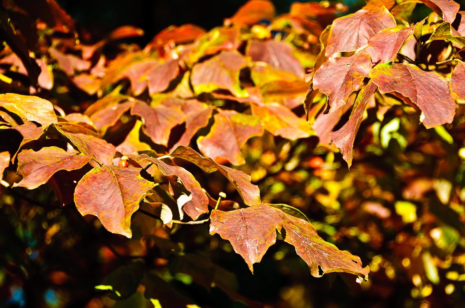 autumn-leaves-2202
