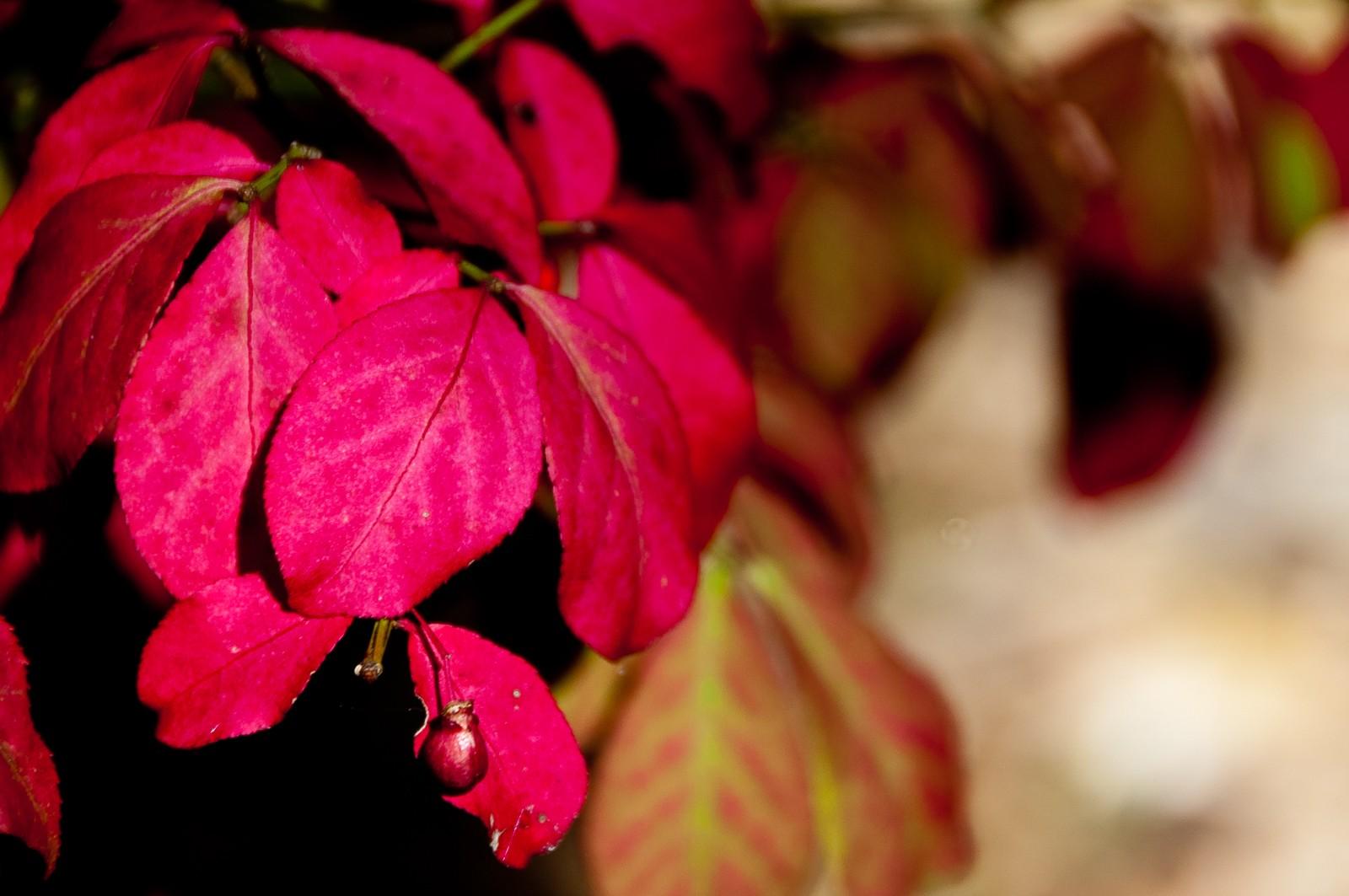 autumn-leaves-2204