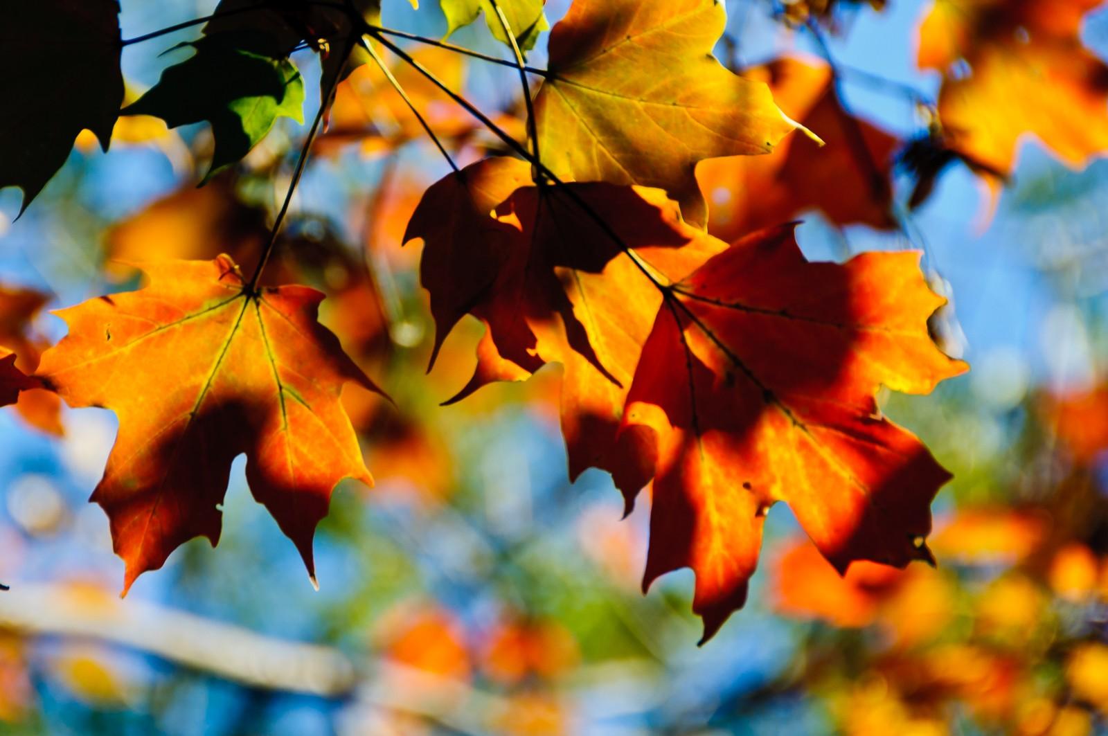autumn-leaves-2205