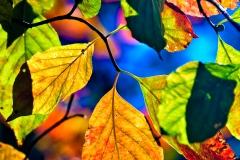 leaves-2201
