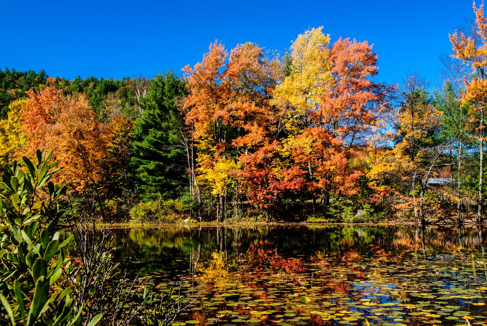 autumn-leaves-0055