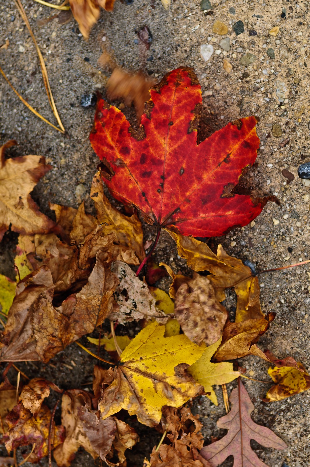 colored-leaves-2553