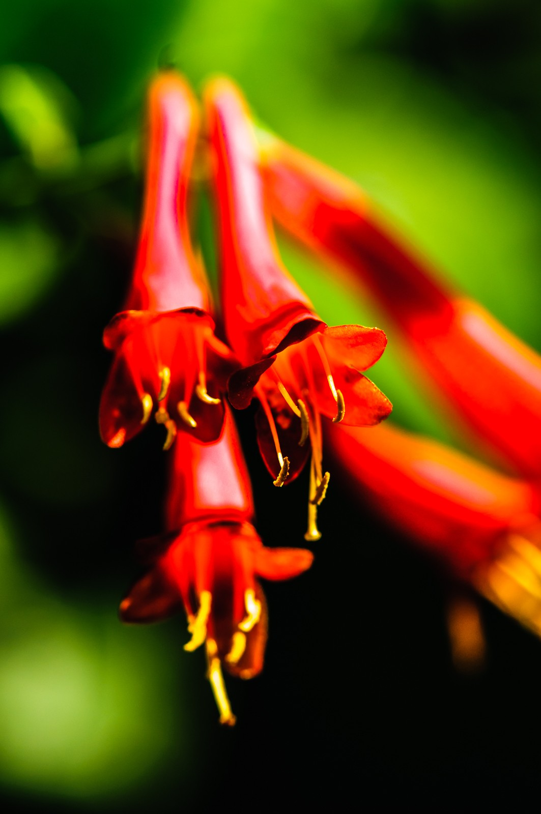 wildflower-0561