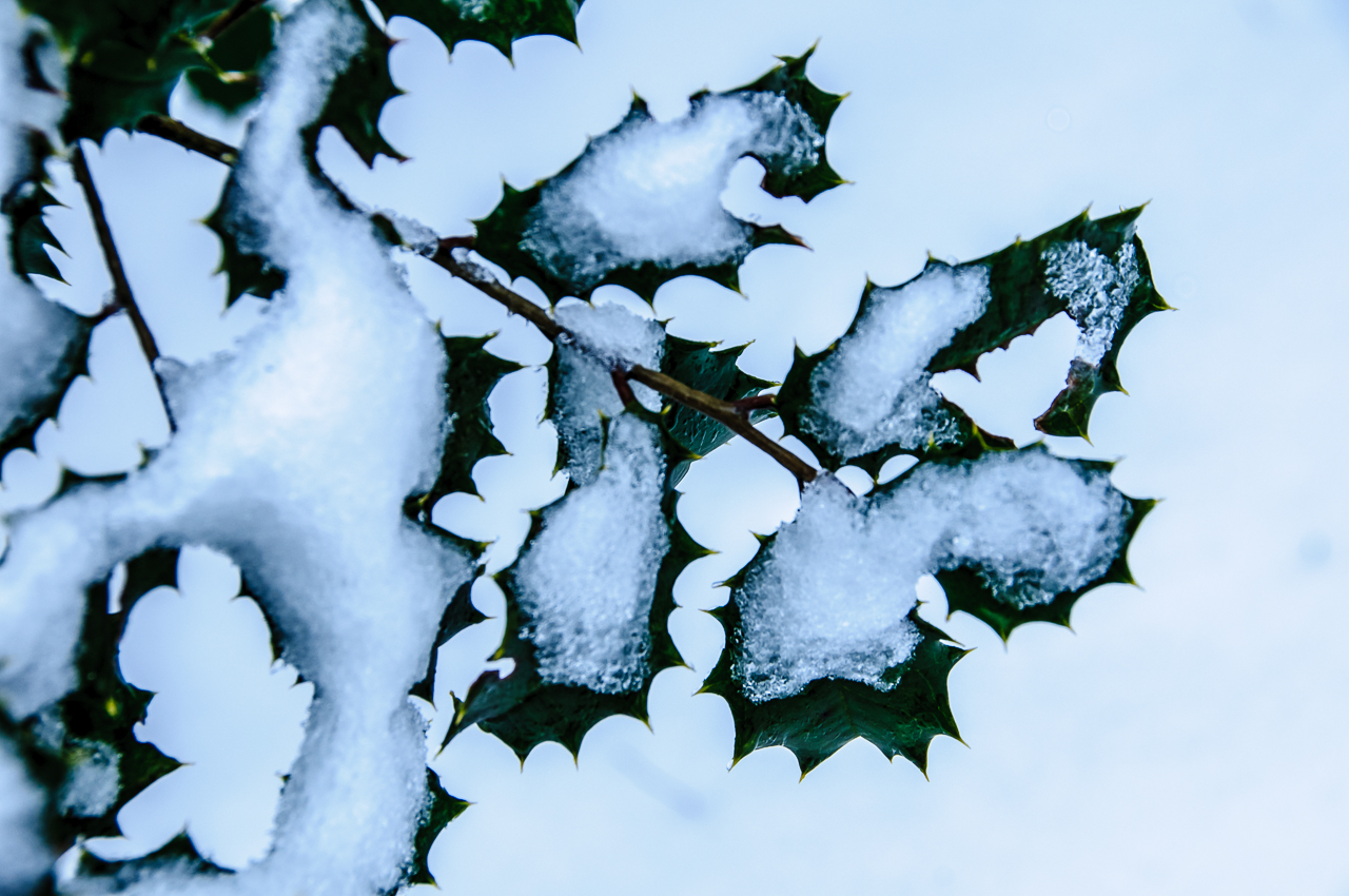 photograph holly-snow-0843