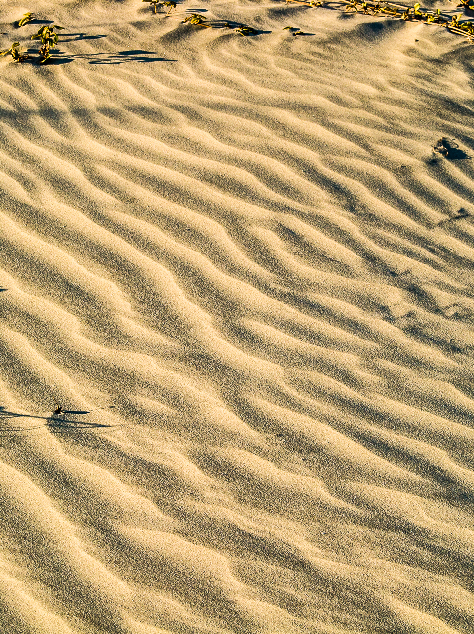 Phtograph of a sand dune at Jockey Ridge