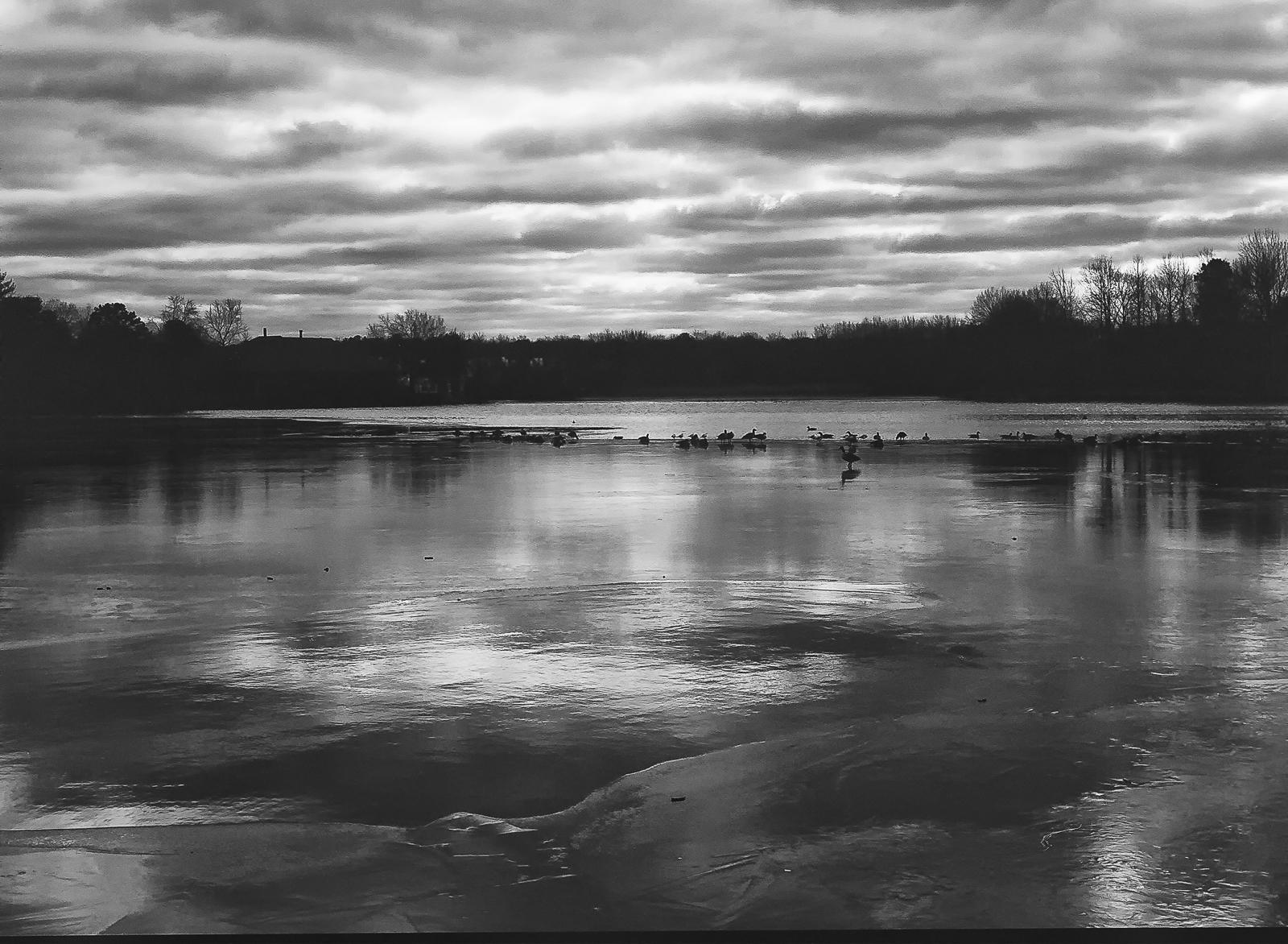 ducks-52550009