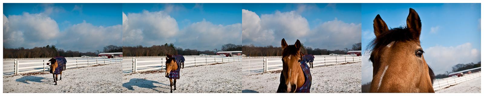 horse-