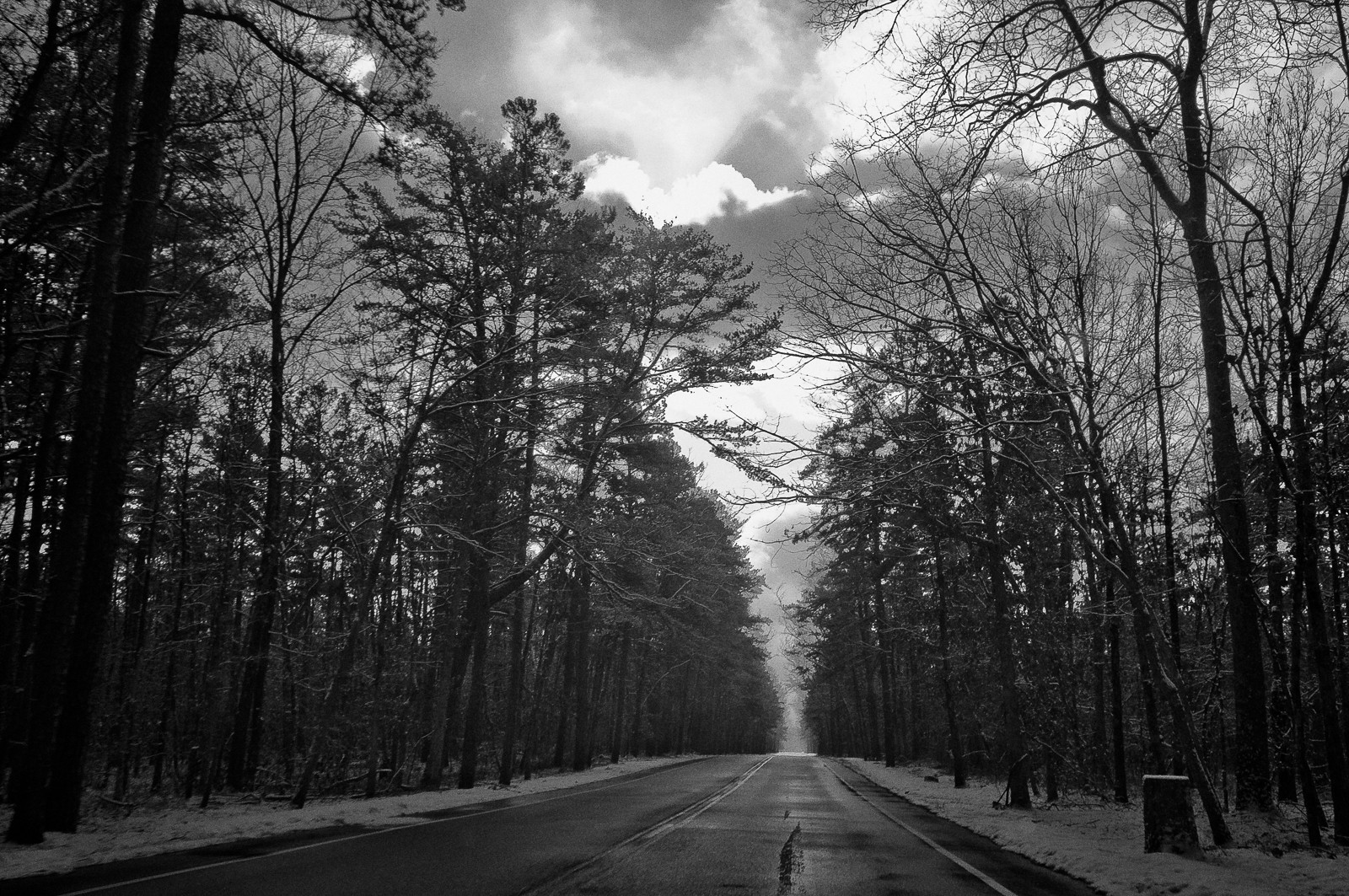 pine-lands-3750
