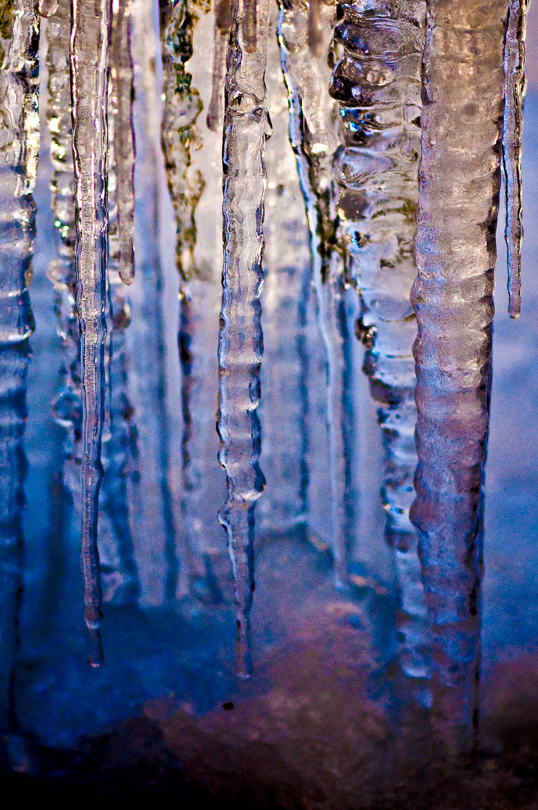 icicles-4989