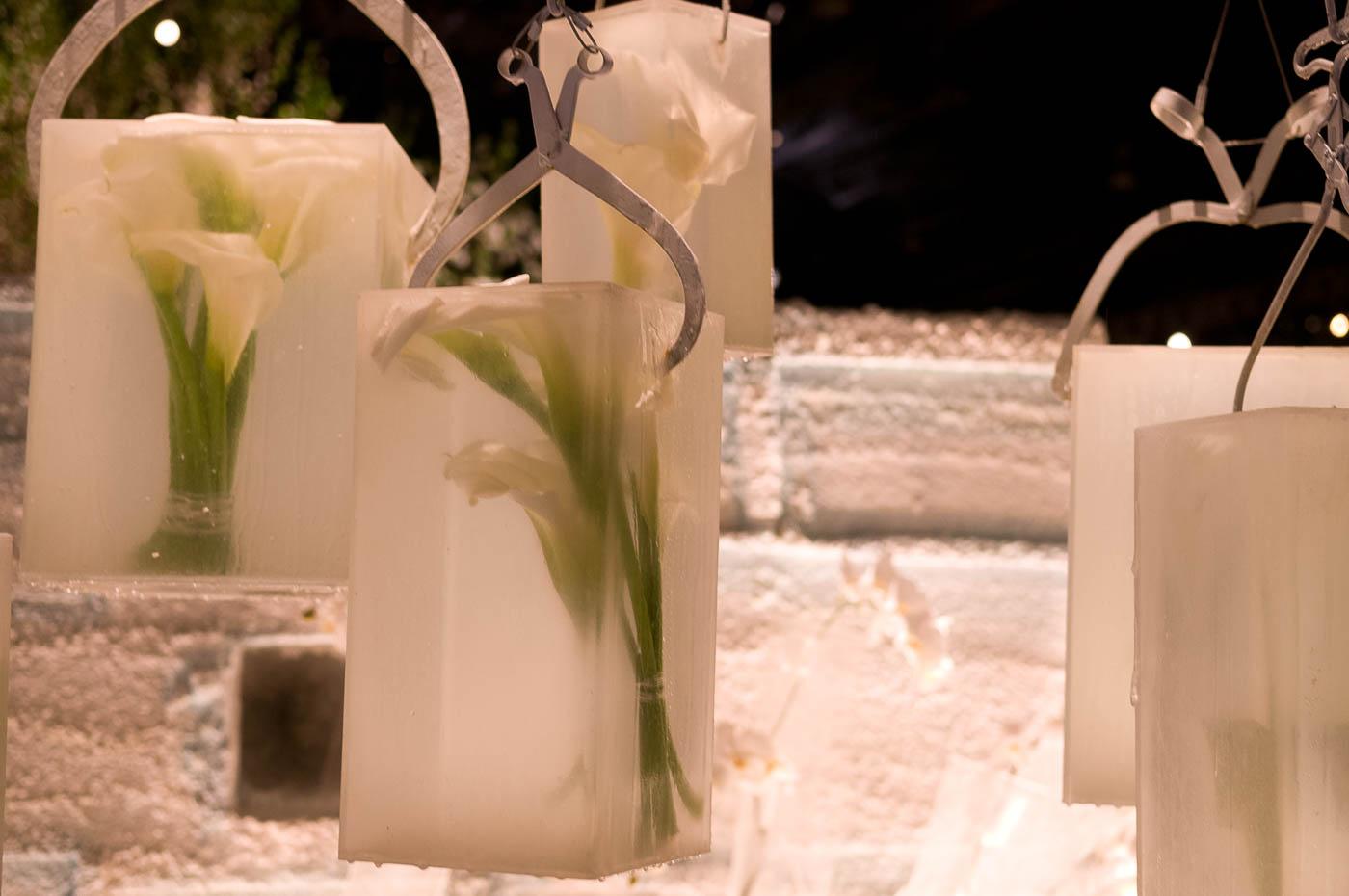 ice block lily
