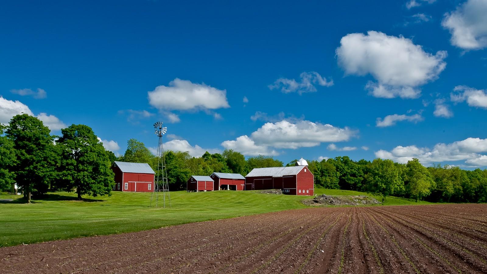 ny-farm-8176