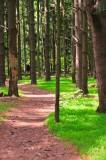 Photograph of rancocas-woods-8745