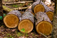 Phtograph of logs at rancocas-woods