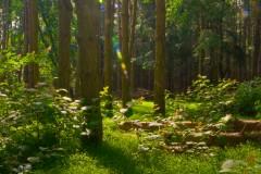 rancocas-woods-9