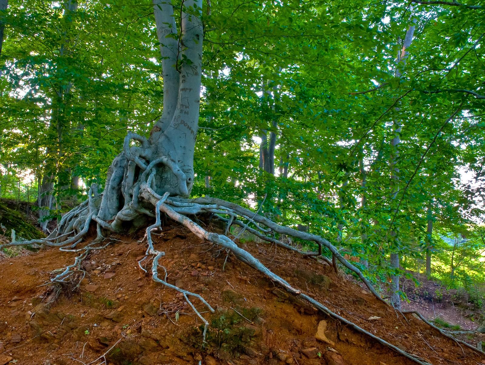 tree-root-9163
