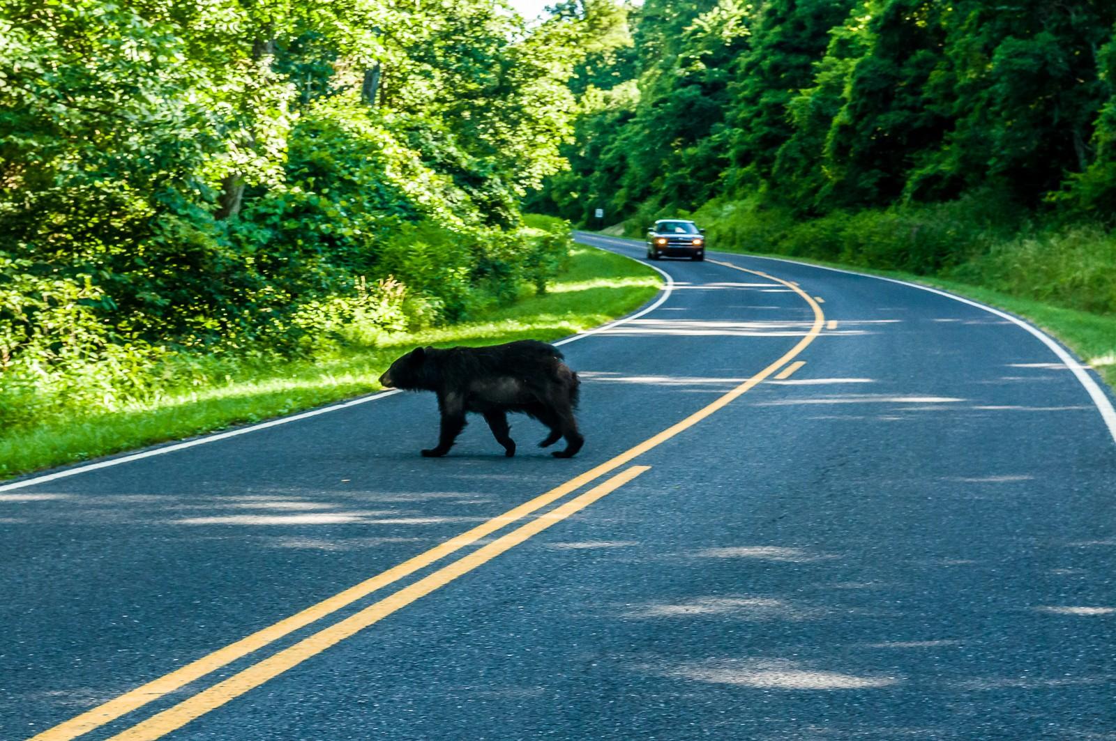 bear-0733