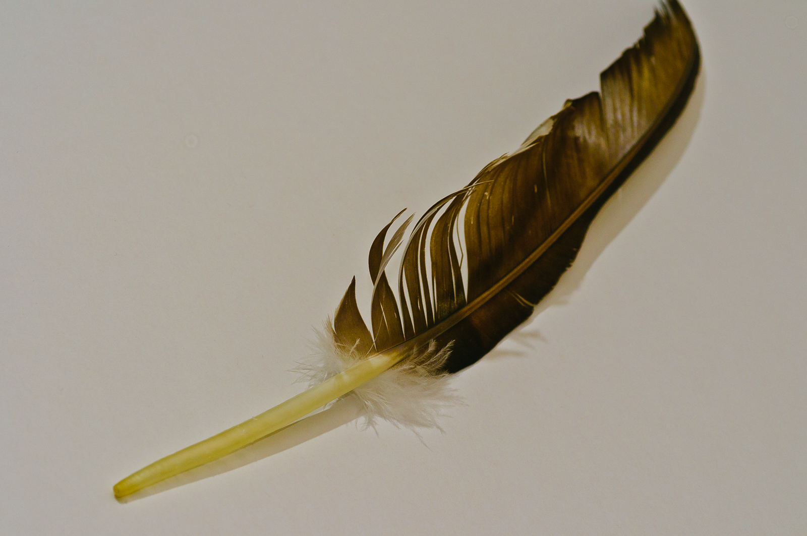 feather-0921