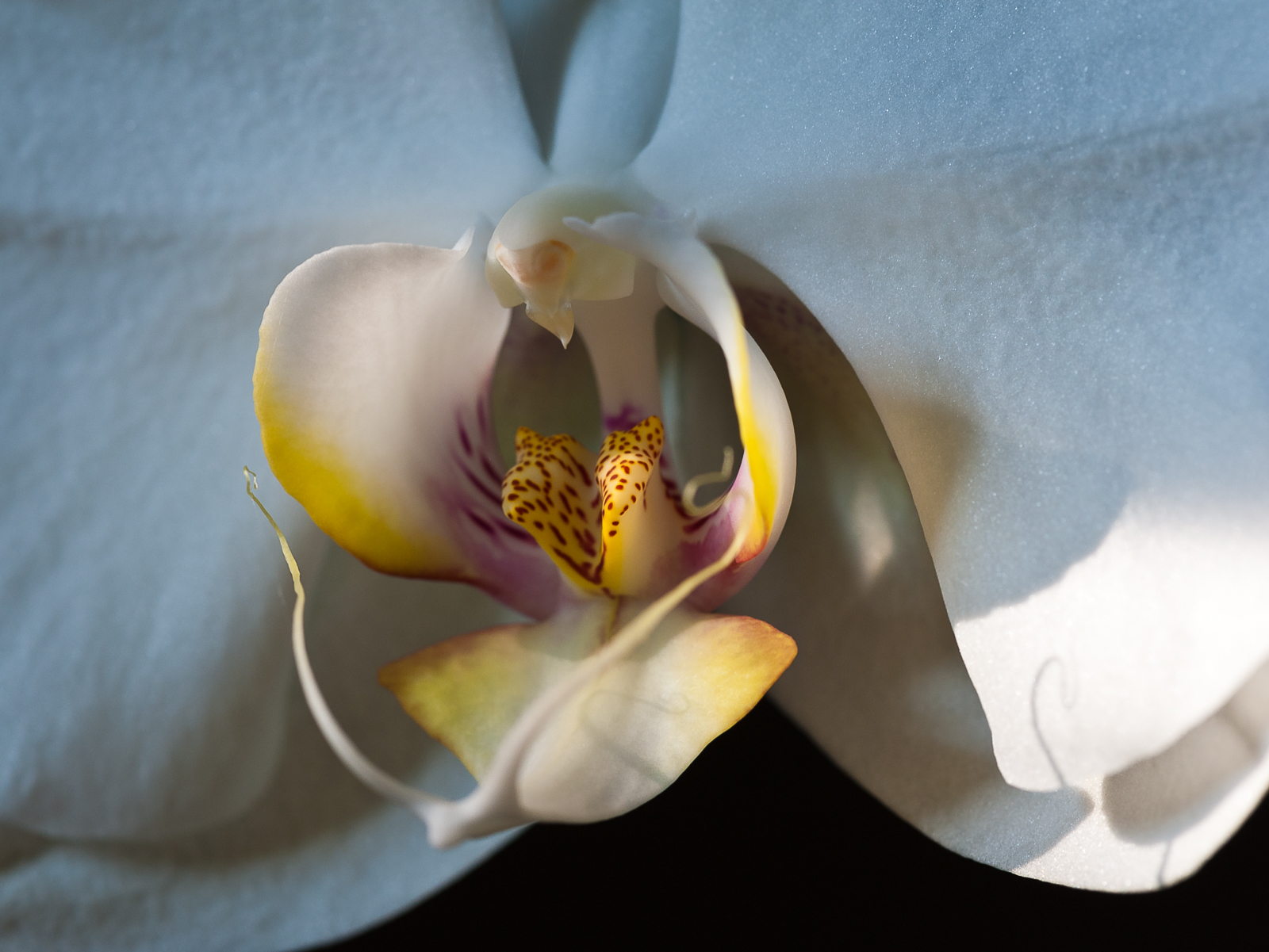 orchid-0094