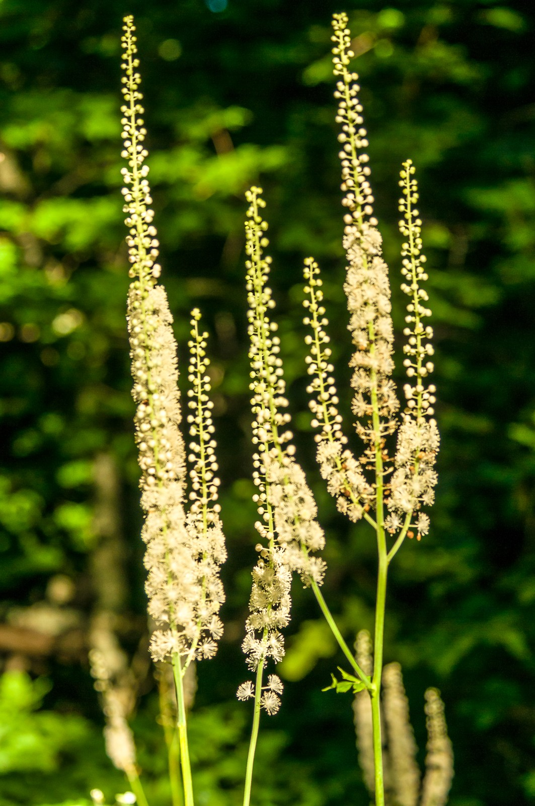 wildflowers-0829