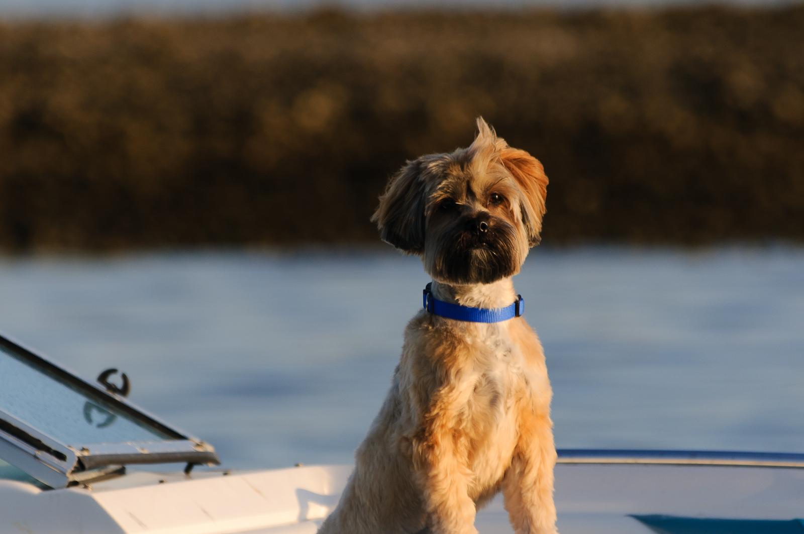 boat-dog-140