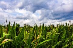 clouds-corn-0354