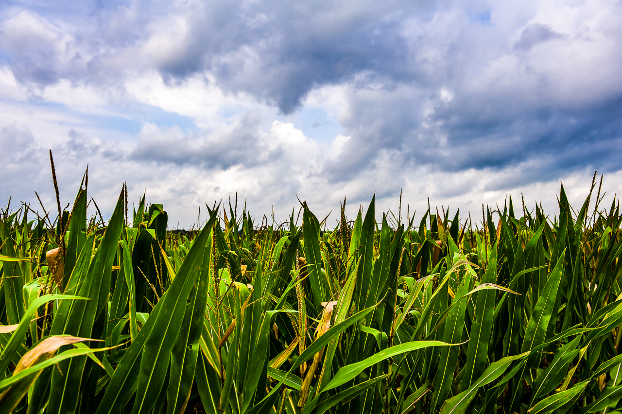 clouds-corn-0354