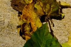 leaves-3242