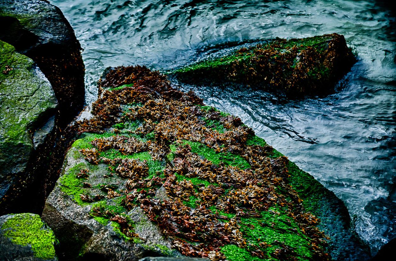 Green rocks-photo 5879