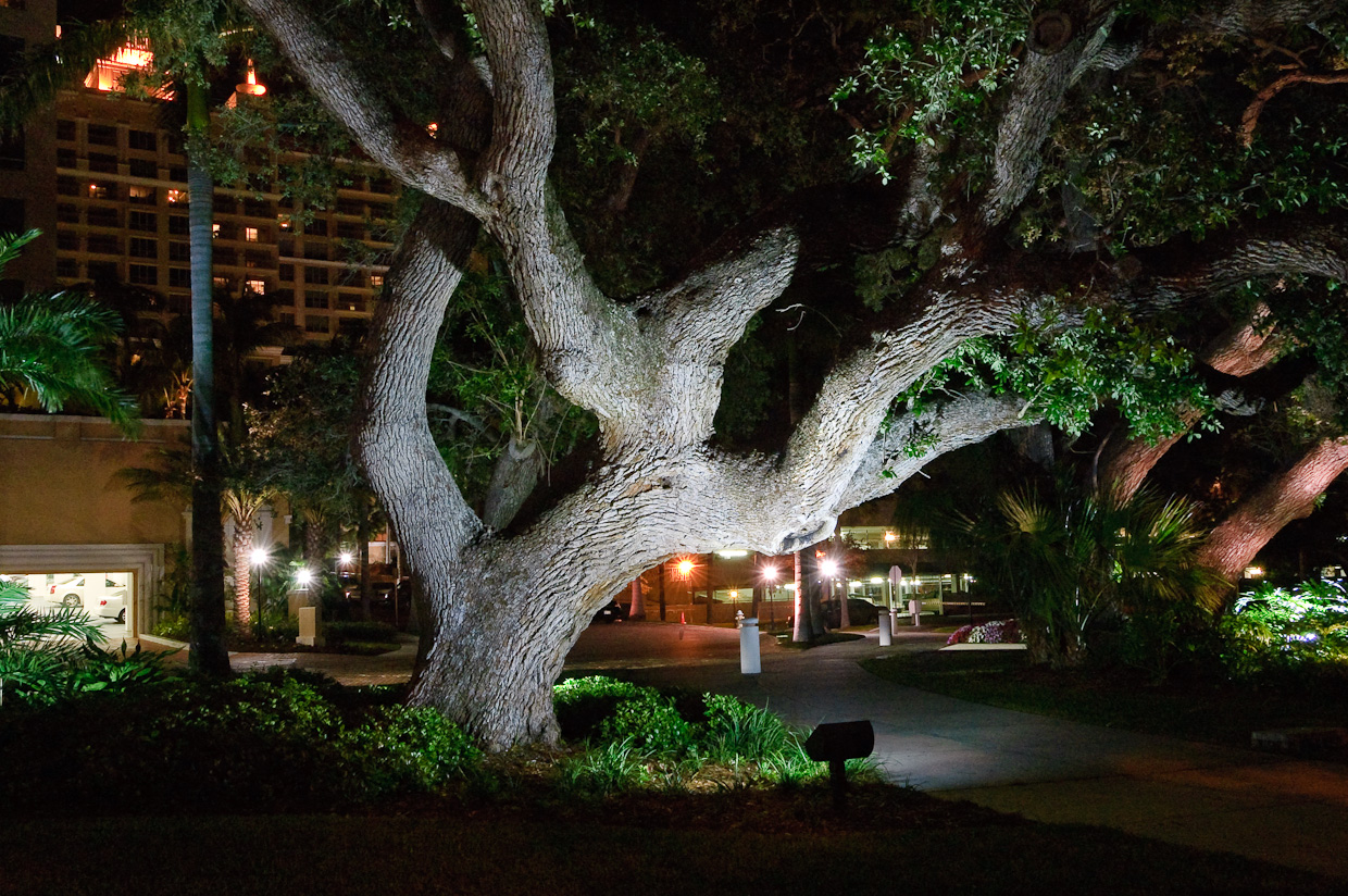 Trees at Night in Sarasota Florida.