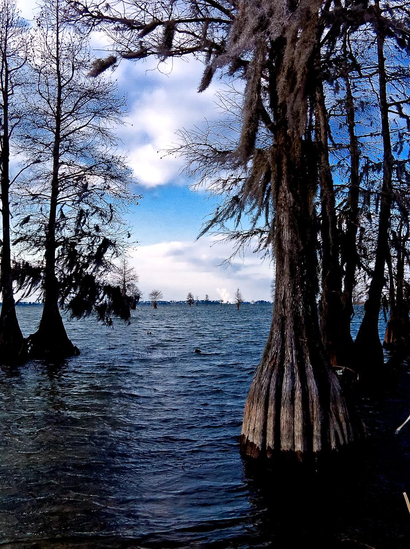 South Carolina Swamp
