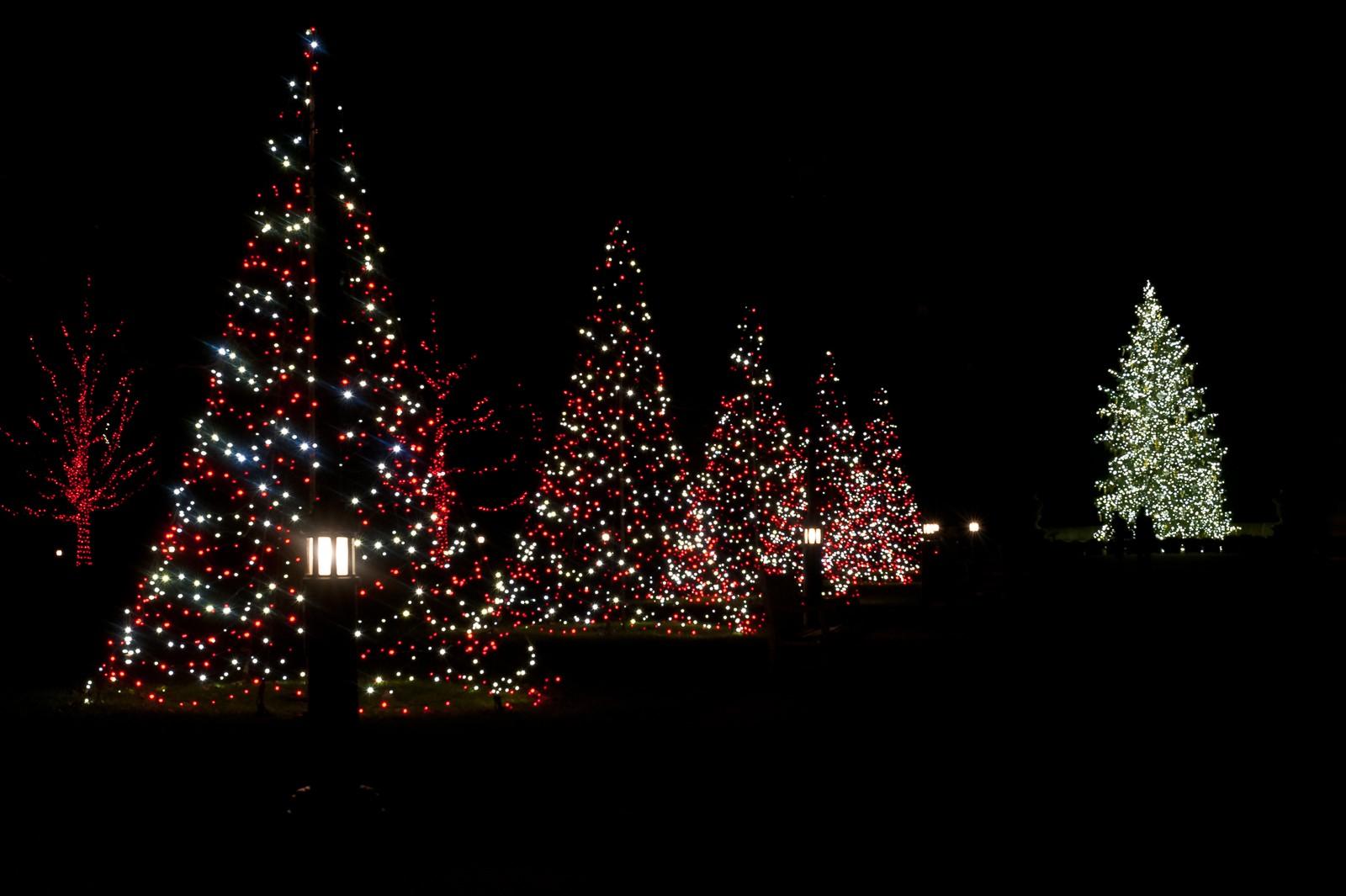 tree-lights-longwood-7276