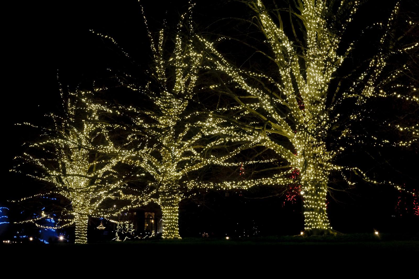 tree-lights-longwood-7290