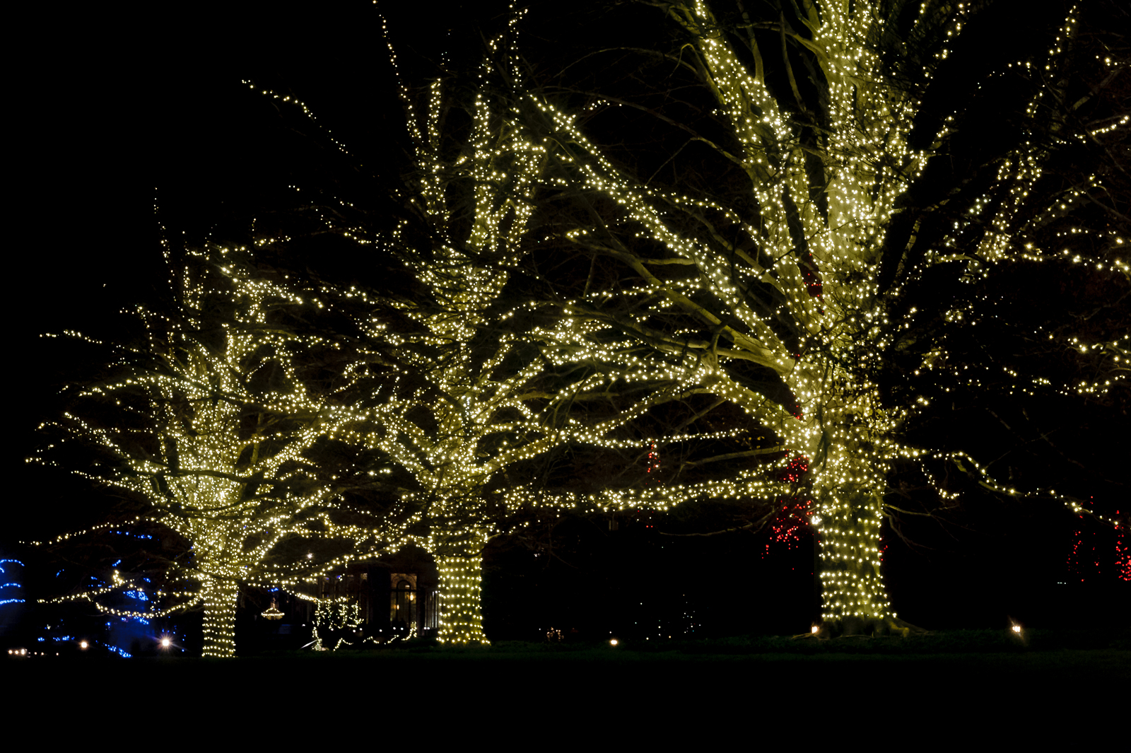 tree-lights-longwood-7290
