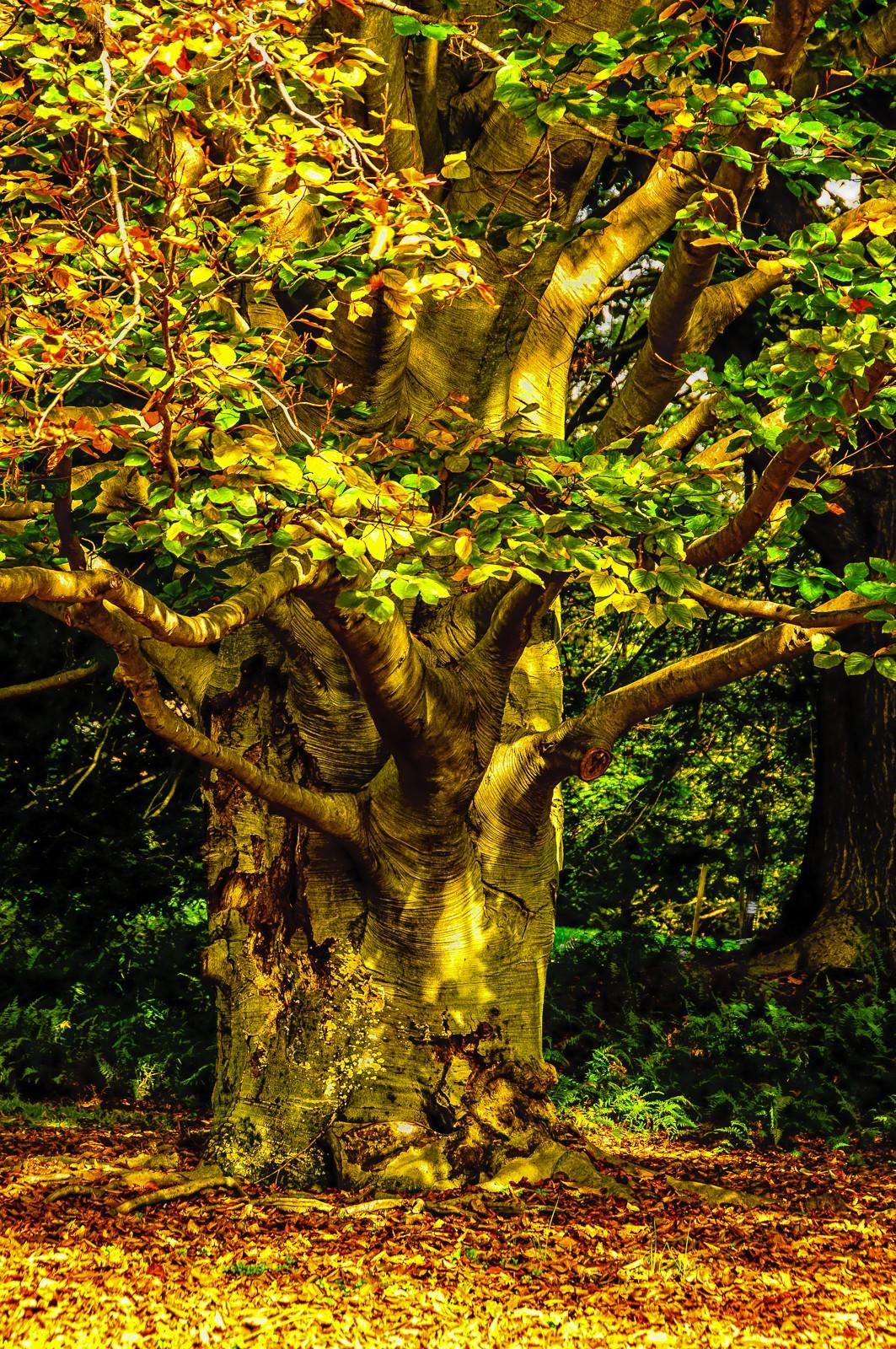 autumn-tree-3717