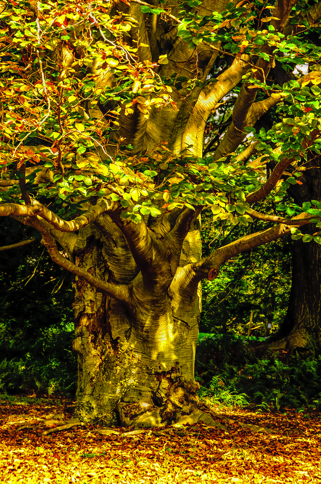 autumn-tree-3717