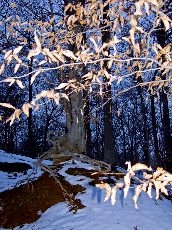 Last Standing Tree